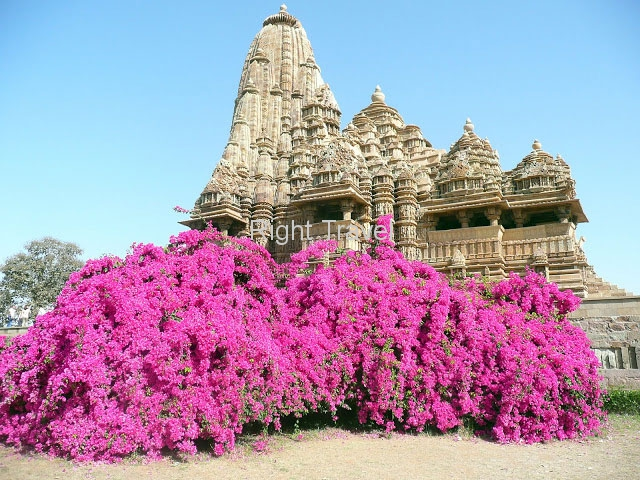 14 Day Gems of India with Nepal Private Tour